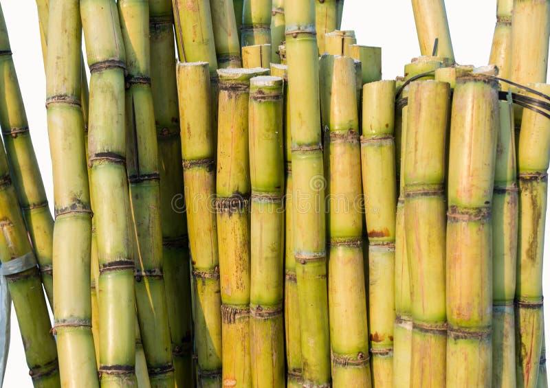 Sugar Cane royalty-vrije stock foto's