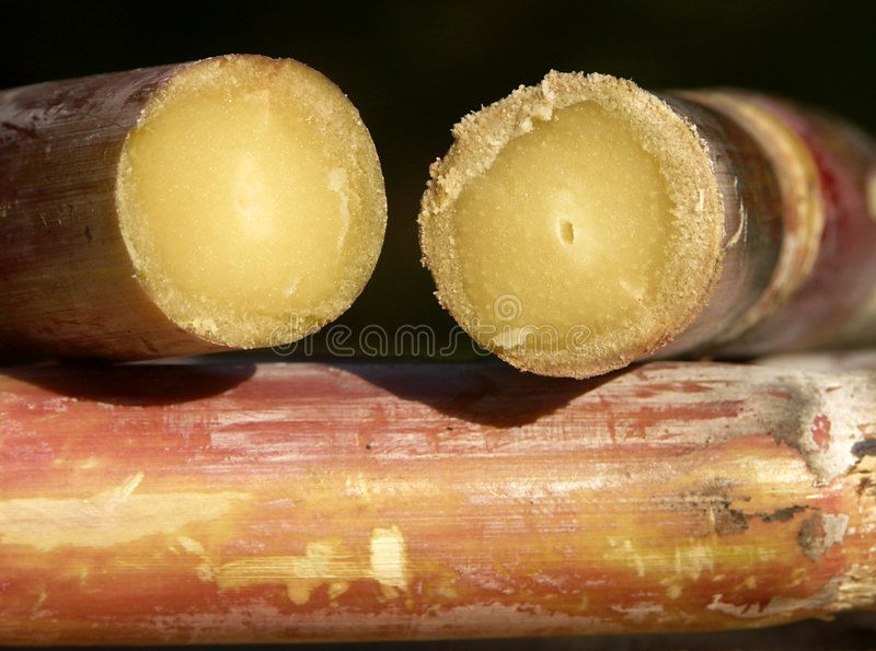 Sugar cane stock photos