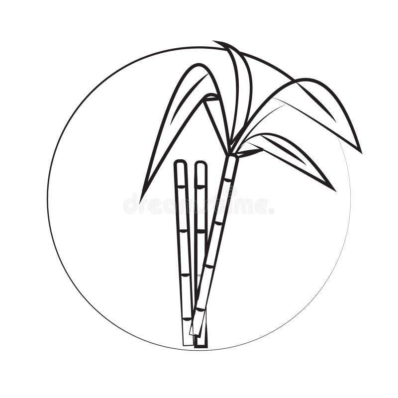 Sugar Cane photos stock