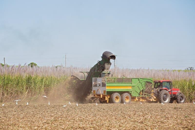 Sugar Cane Australia de cosecha mecánico imagen de archivo