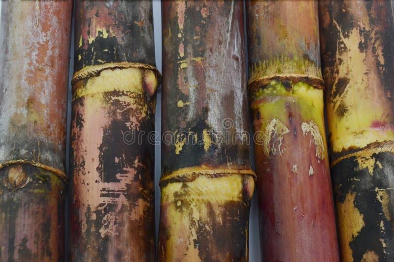 Sugar cane background. Fresh sugar cane stem background stock image