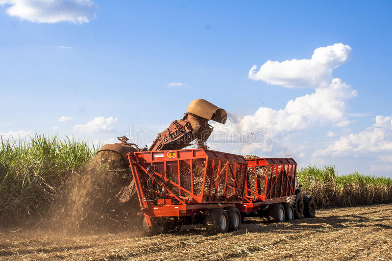 Sugar cane. Bariri, São Paulo, Brazil, October 10, 2008. Sugar cane harvesting in Brazil royalty free stock image