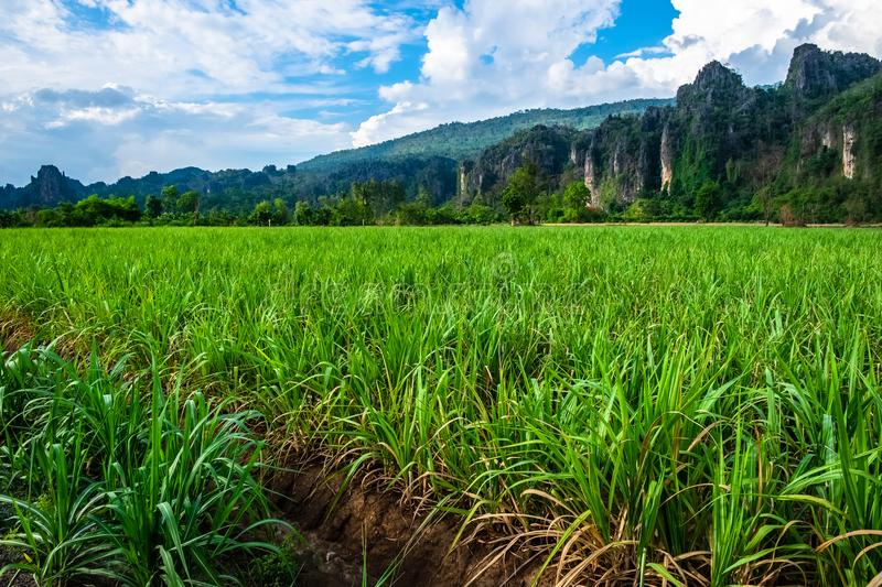 Sugar Cane Farm. And limestone mountain, Noen Maprang distrcit, Phitsanulok, Thailand royalty free stock image