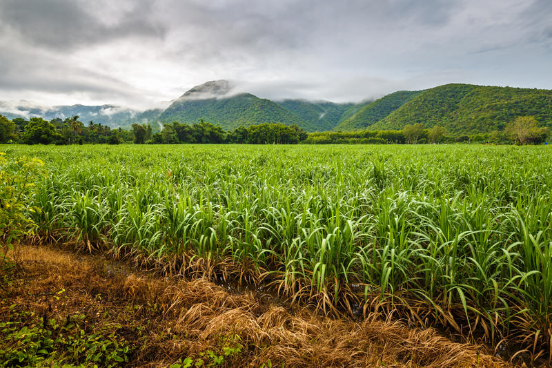 Sugar Cane Farm. In the mountain, countryside of Thailand royalty free stock photo