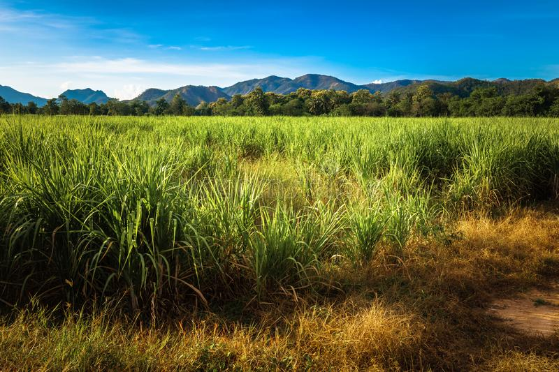 Sugar Cane Farm in Thailand. Landcape of sugar cane farm and mountain under blue sky, countryside of Thailand royalty free stock photography