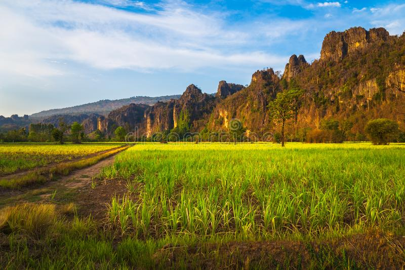 Sugar Cane Farm View at Phitsanulok, Thailand. Limestone mountain range and sugar cane farm at sunset, travel scenic at Noen Maprang district, Phitsanulok stock image