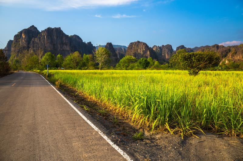 Sugar Cane Farm View at Phitsanulok, Thailand. Sugar cane farm on the roadside and limestone mountain range, travel scenic on the main road at Noen Maprang stock photography