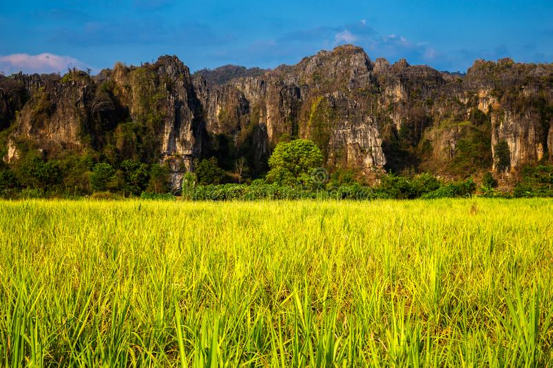Sugar Cane Farm View at Phitsanulok, Thailand. Sugar cane farm on the roadside and limestone mountain range, travel scenic at Noen Maprang district, Phitsanulok royalty free stock photos