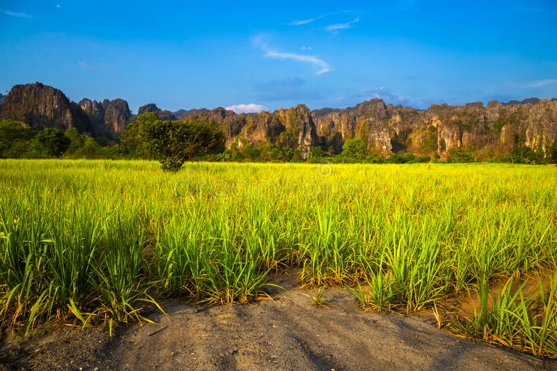 Sugar Cane Farm View at Phitsanulok, Thailand. Sugar cane farm on the roadside and limestone mountain range, travel scenic at Noen Maprang district, Phitsanulok royalty free stock photo