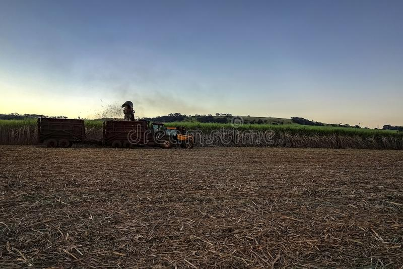 Sugar cane field mechanical harvesting with a tractor carrying harvest. Photo of sugar cane field mechanical harvesting with a tractor carrying harvest stock photo