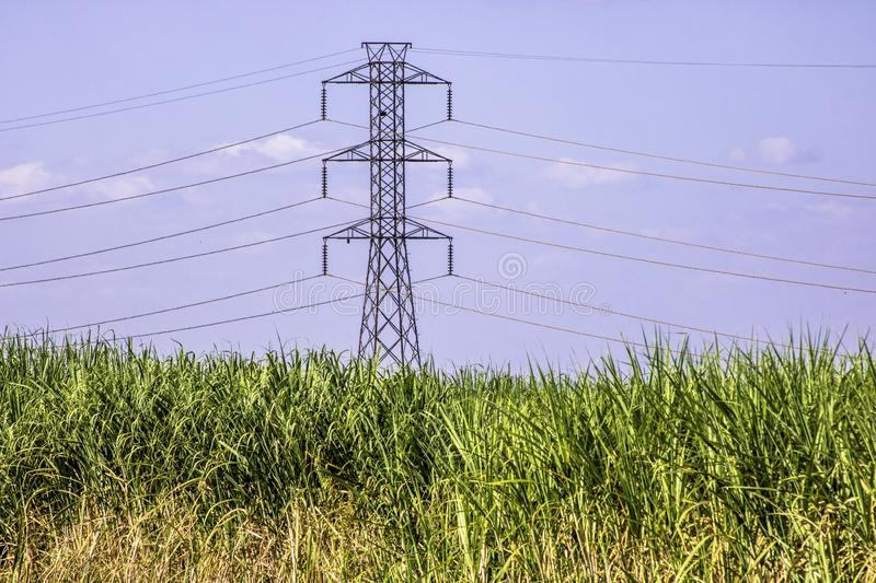 Sugar cane field with power energy tower. In Brazil stock photography
