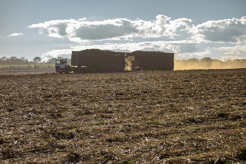 Sugar cane field with a truck carrying harvest. Photo of sugar cane field with a truck carrying harvest stock photography