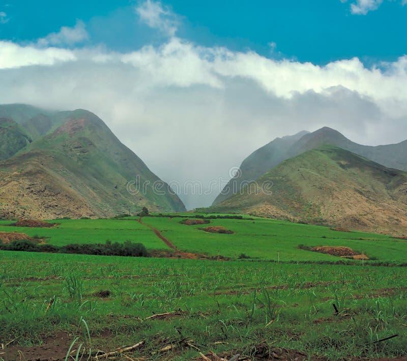 Sugar Cane Fields em Maui, Havaí no 1990's fotos de stock royalty free