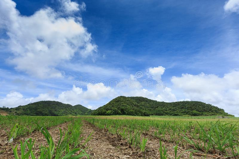 Sugar cane fields from Mauritius Island, Indian Ocean stock photography