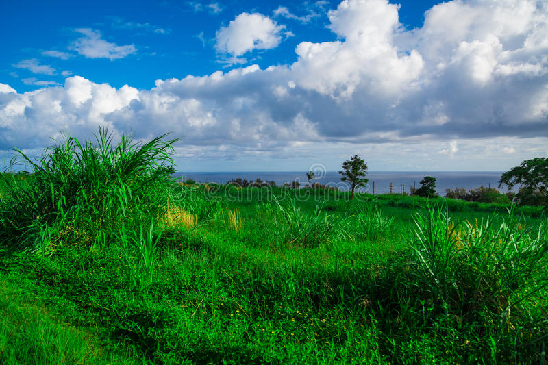 Sugar Cane Fields and ocean taken in Hawaii. Sugar Cane Fields in Hawaii. Ocean in the background with blue sky and clouds. Taken in Hilo, Hawaii stock images