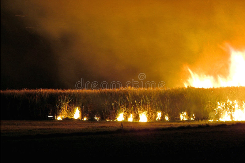 Sugar Cane fire. Pre harvest sugar cane fire royalty free stock photography
