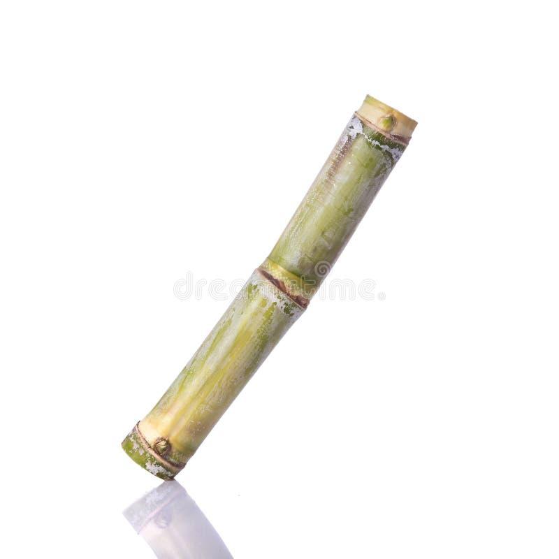 Sugar Cane fresco Tiro del estudio aislado en blanco imagenes de archivo