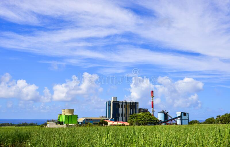 Sugar cane growing in a field with the refinery stock image
