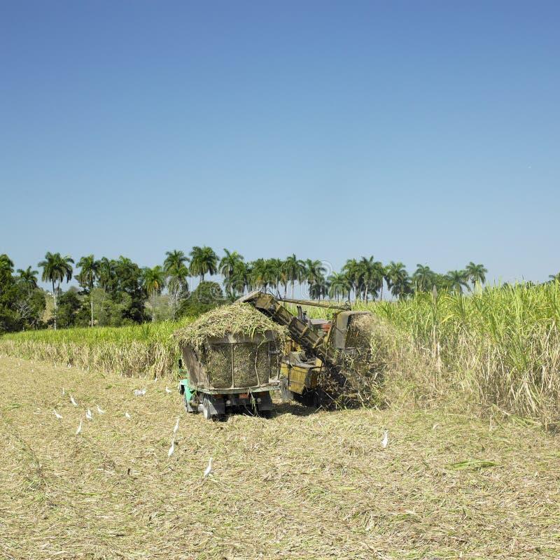 Sugar cane harvest. In Sancti Spiritus Province, Cuba stock images