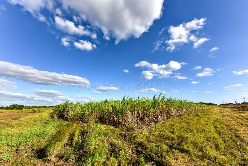 Sugar Cane Harvest. Sugar cane fields in a plantation in Guayabales, Cuba stock image