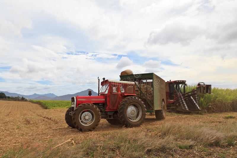 Sugar cane harvest in Mauritius royalty free stock image