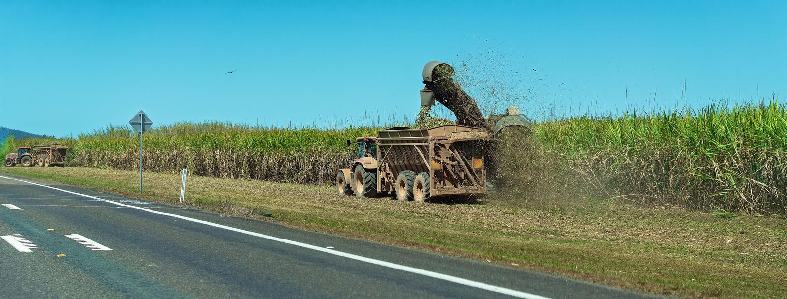 Sugar Cane Harvesting Beside A Busy Highway. A cane harvester cutting sugar cane by the roadside and a tractor carting the crop to the refinery stock photo