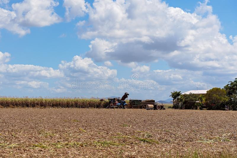 Sugar Cane Harvesting During Crushing Season In Australia. Harvesting sugar cane on an Australian farm and loading it chopped into bins for haulage to the stock images
