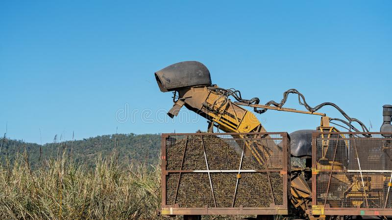 Sugar Cane Harvesting During Crushing Season In Australia. Harvesting sugar cane on an Australian farm and loading it chopped into bins for haulage to the royalty free stock photo