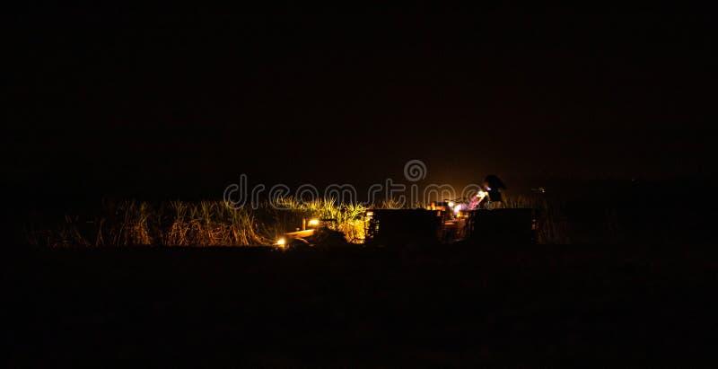 Sugar cane hasvest plantation night. Field royalty free stock images