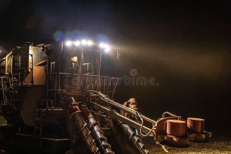 Sugar cane hasvest plantation night. Field royalty free stock photo