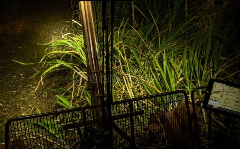 Sugar cane hasvest plantation night. Field royalty free stock image