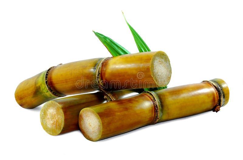 Sugar cane isolated on white. Background royalty free stock image