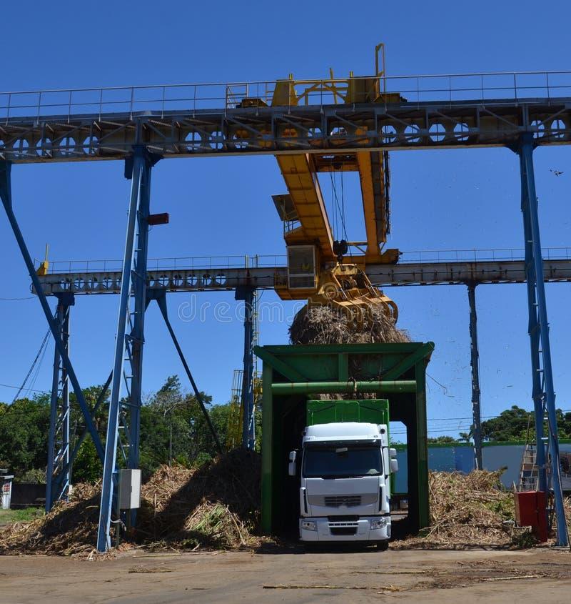 Sugar cane loading stock image