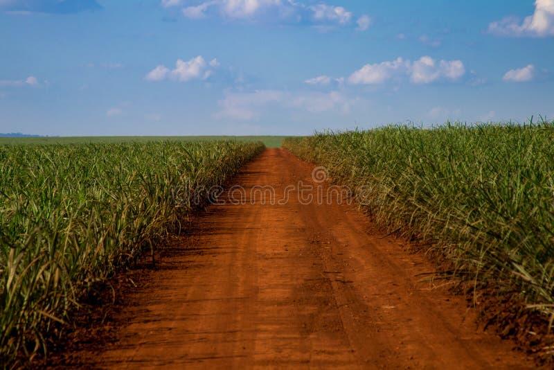 Sugar cane and road. Blue sky stock photos