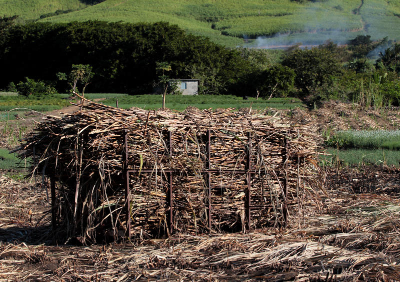 Sugar cane stack. Stack of sugar cane after harvest in Mauritius royalty free stock images