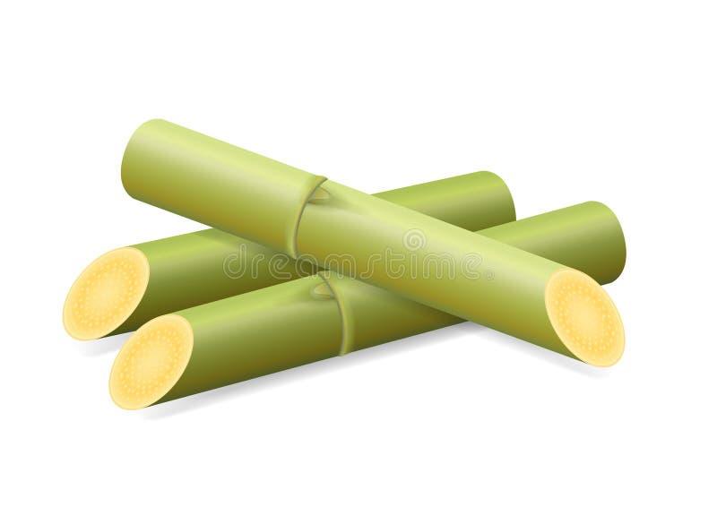 Sugar Cane, Stock, Stücke neues Zuckerrohr-Grün, Sugar Cane Cut Isolated auf weißem Hintergrund stock abbildung