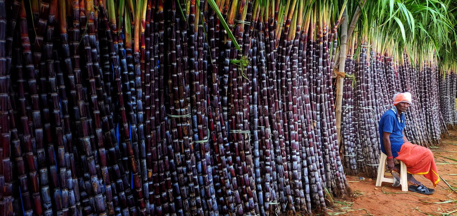 Sugar cane Store royalty free stock photography