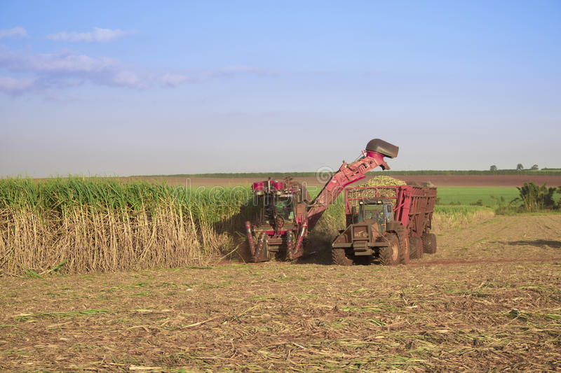 Sugar cane - Tractor and combine harvesting sugar cane. Field plantation in Brazil on sunset stock photo