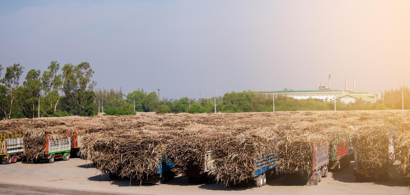 Sugar cane truck ,full loaded in the field with blue sky view stock images