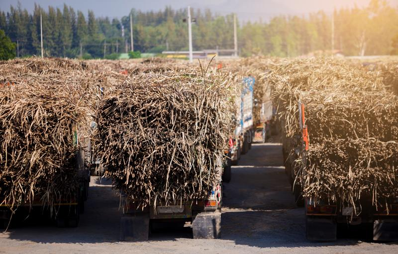 Sugar cane truck ,full loaded in the field with blue sky view royalty free stock image