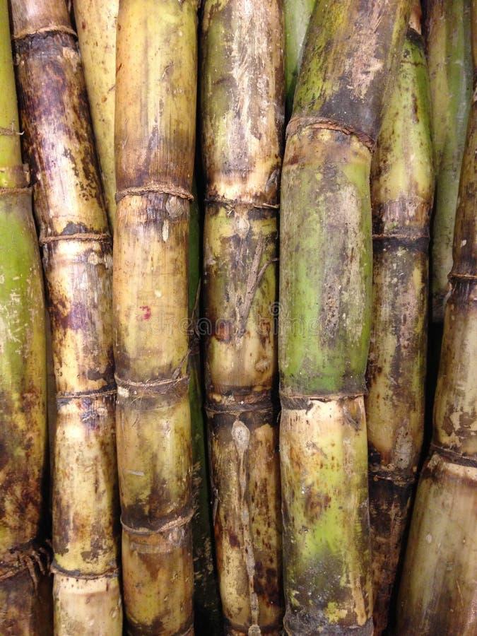 Sugar Cane voor Verkoop royalty-vrije stock foto