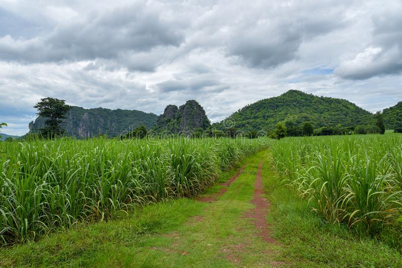 Sugar field and mountains. Road trough pass sugar field and mountains with sunset, sugar farm agriculture and evening time light royalty free stock photo