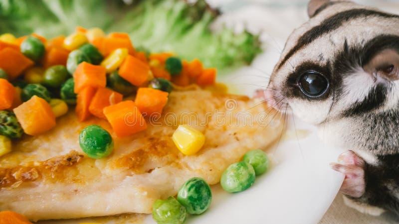 Sugar Glider mange du bifteck de poissons photographie stock