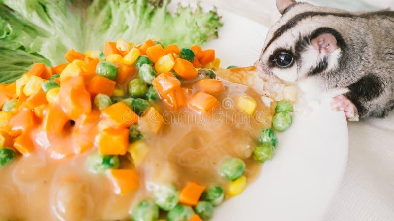 Sugar Glider mange du bifteck de poissons images stock
