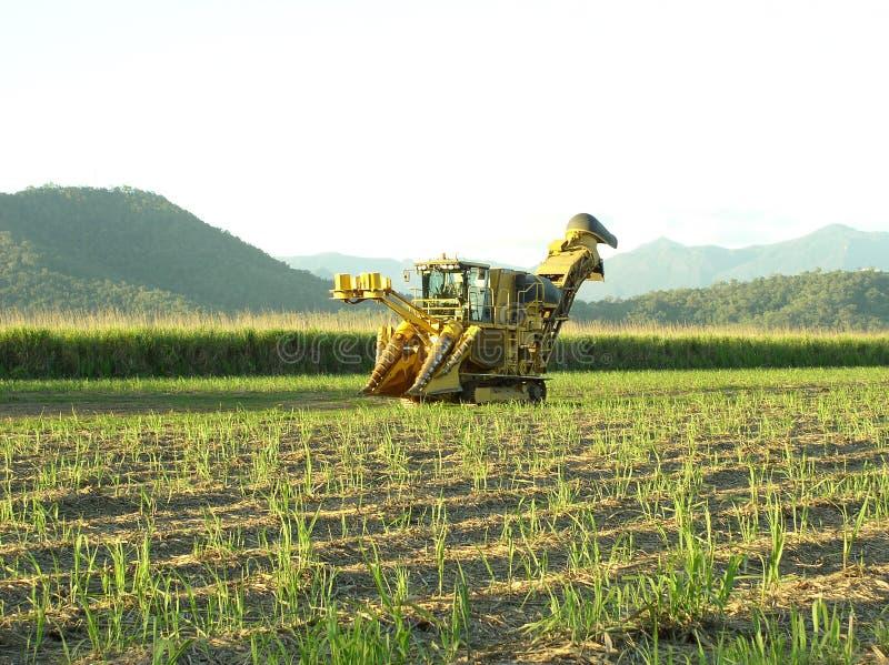 Sugar Industry Sugarcane Harvest Scene in Ingham Queensland Australia. Sugar Industry Sugarcane Harvest Scene, farm equipment, sugarcane, cane in Far North stock photo