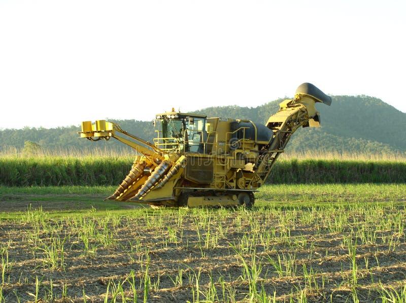 Sugar Industry Sugarcane Harvest Scene i Ingham Queensland Australien royaltyfria bilder