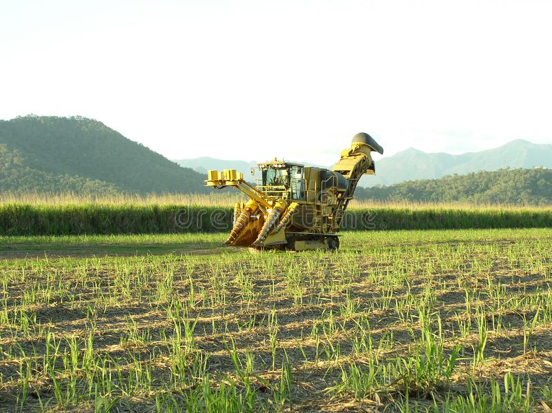 Sugar Industry Sugarcane Harvest Scene in Ingham Queensland Australië stock foto