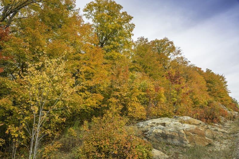 Sugar Maples Growing auf prekambrischem Schild im Herbst - Ontario, lizenzfreie stockfotografie