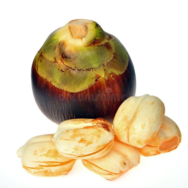 Sugar palm friut stock photography