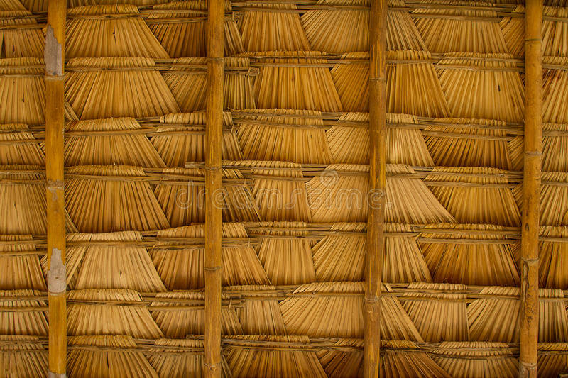 Sugar palm leaf. On the roof stock photography